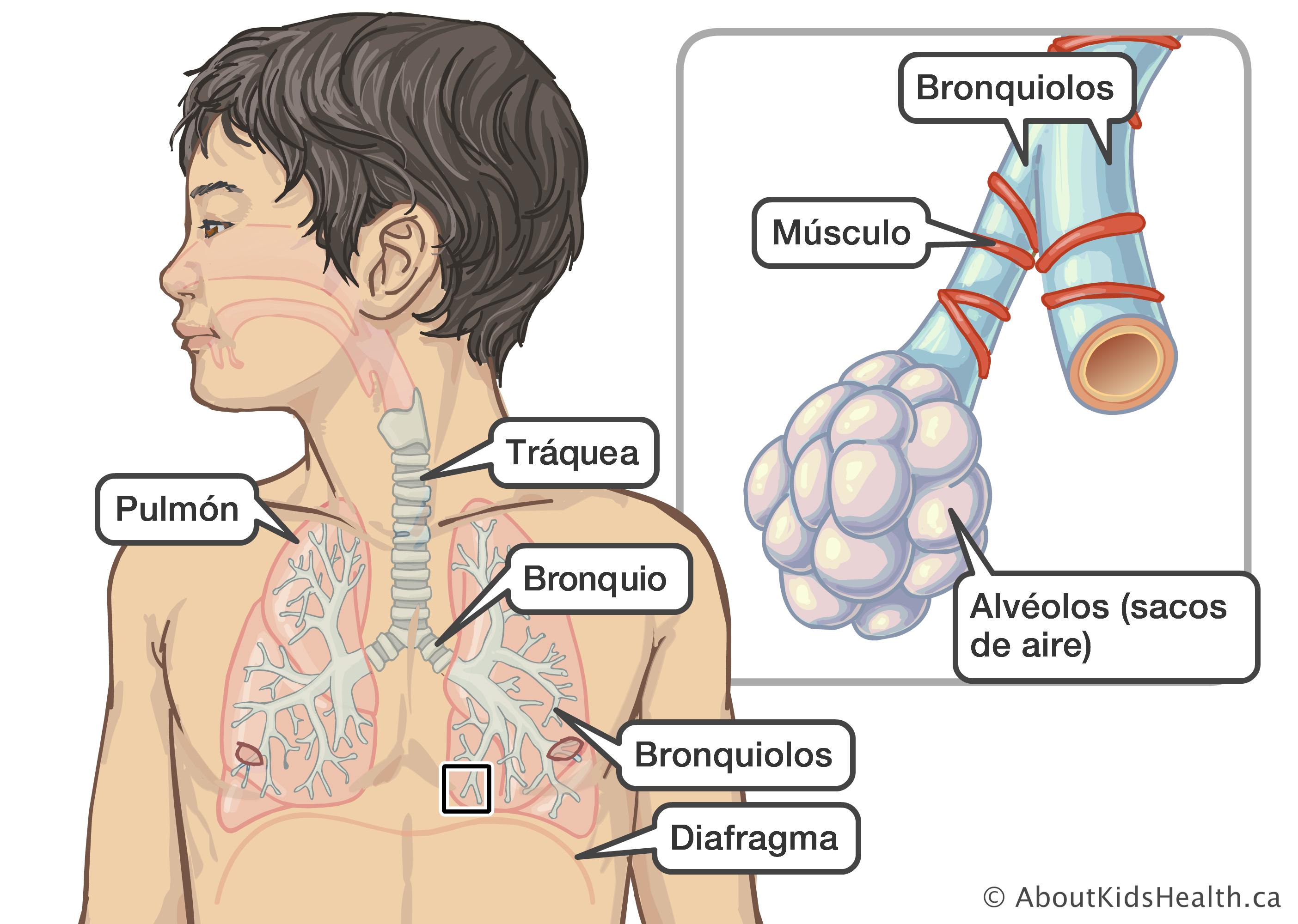 dolor en el pecho al respirar y tos seca