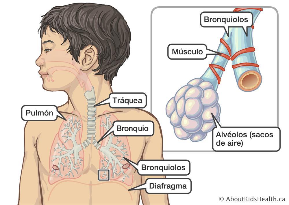 Bronquiolitis c58716be1c30
