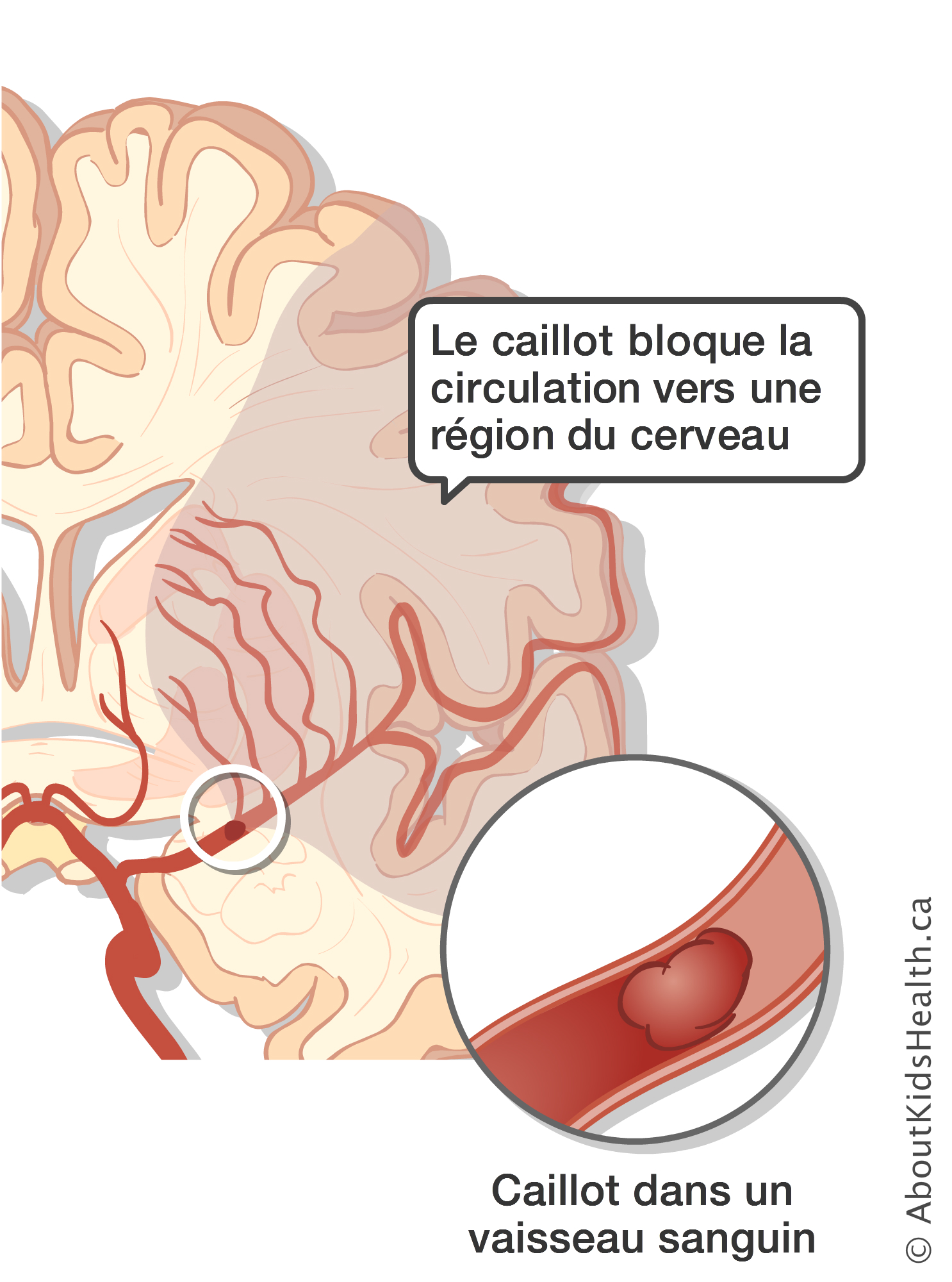 medicament circulation sanguine cerveau
