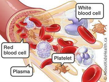 نقل الدم ما تحتاج الى معرفته