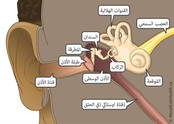 سعفة الاذن التهاب الاذن الظاهرة