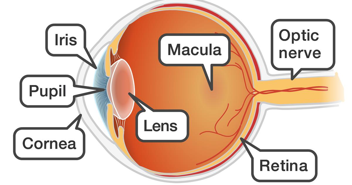 Eye Problems And Juvenile Idiopathic Arthritis