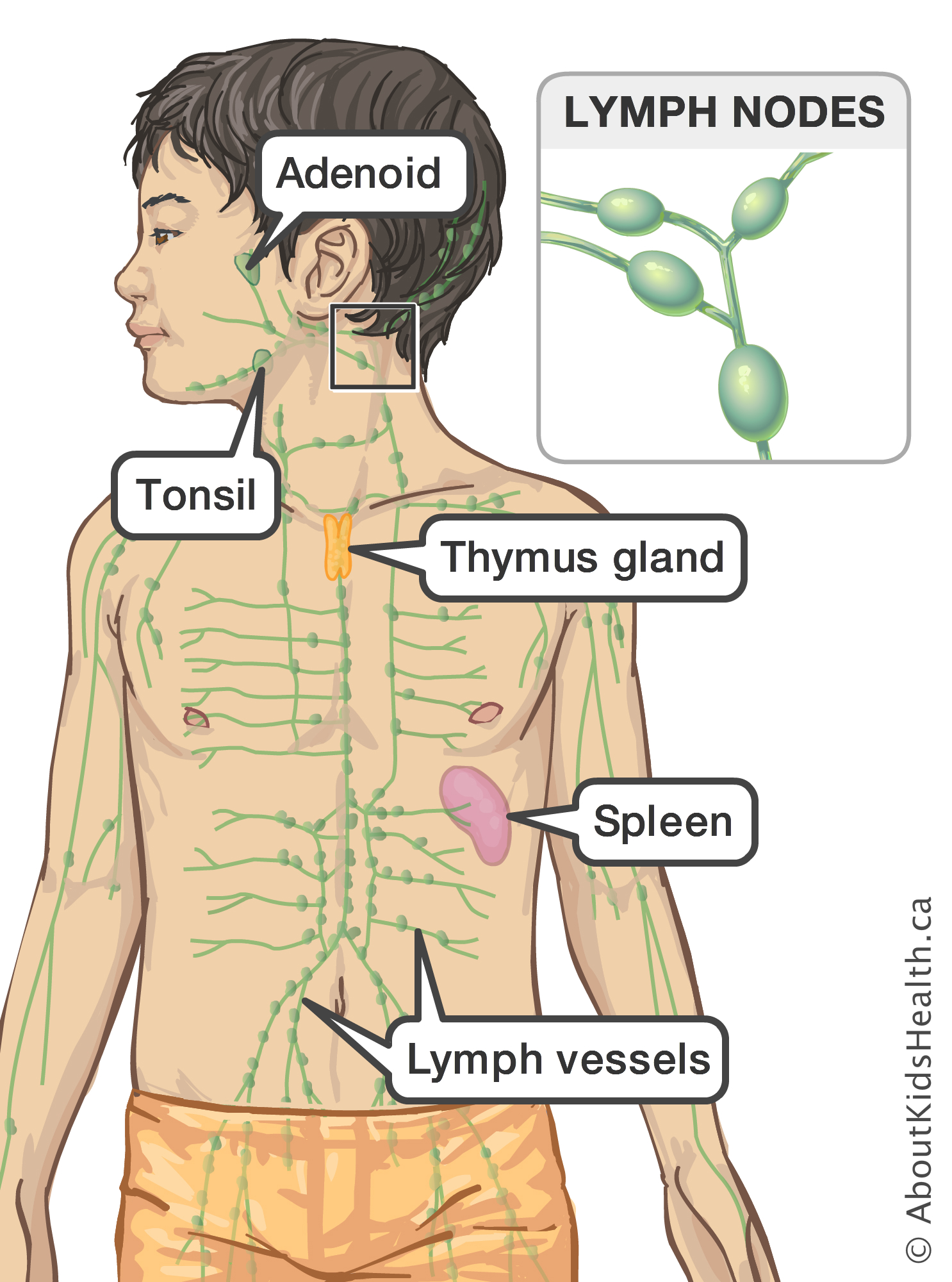 Pain in neck glands causes