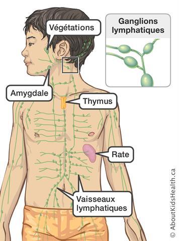 Ganglions lymphatiques enflés