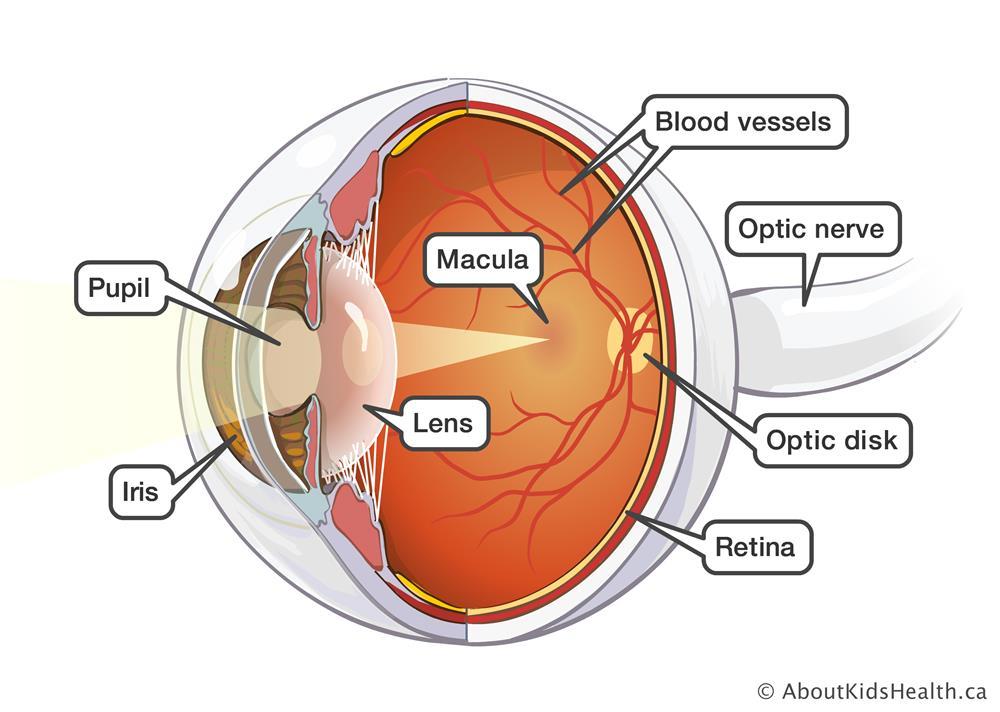 Eye Damage And Diabetes