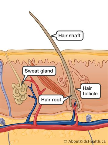Hyperhidrosis (excessive sweating)